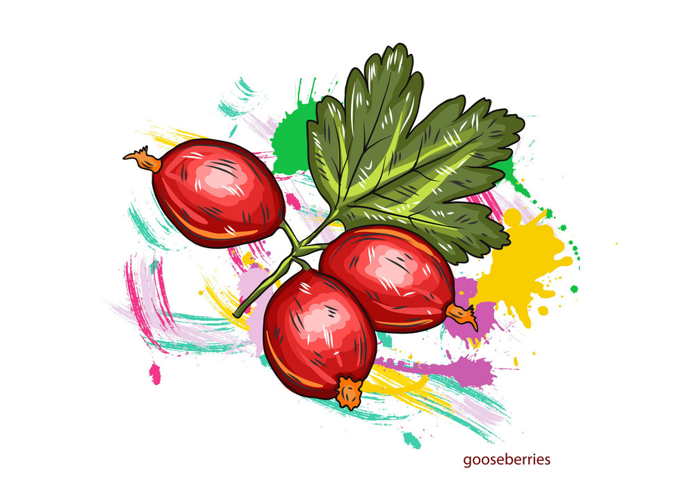 Vector Gooseberries With Colorful Splashes