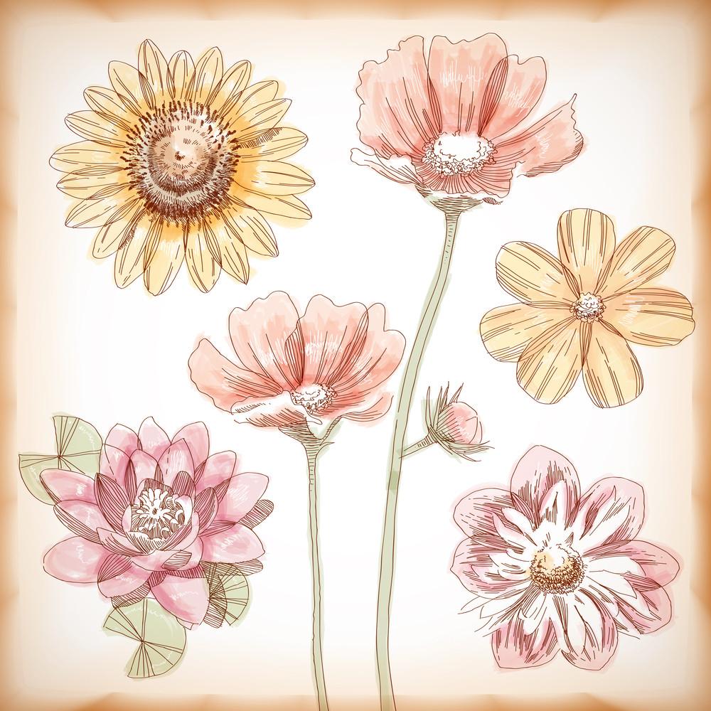 Vector Hand gezeichnet Verschiedene Blumen