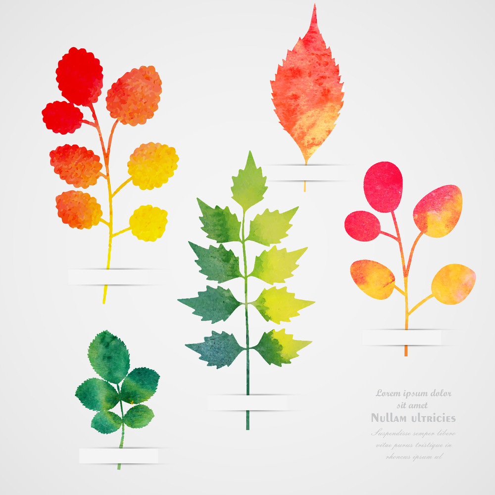 Vector herbarium vintage template watercolor leaf collection of watercolor hand drawn leaves - Model herbarium ...