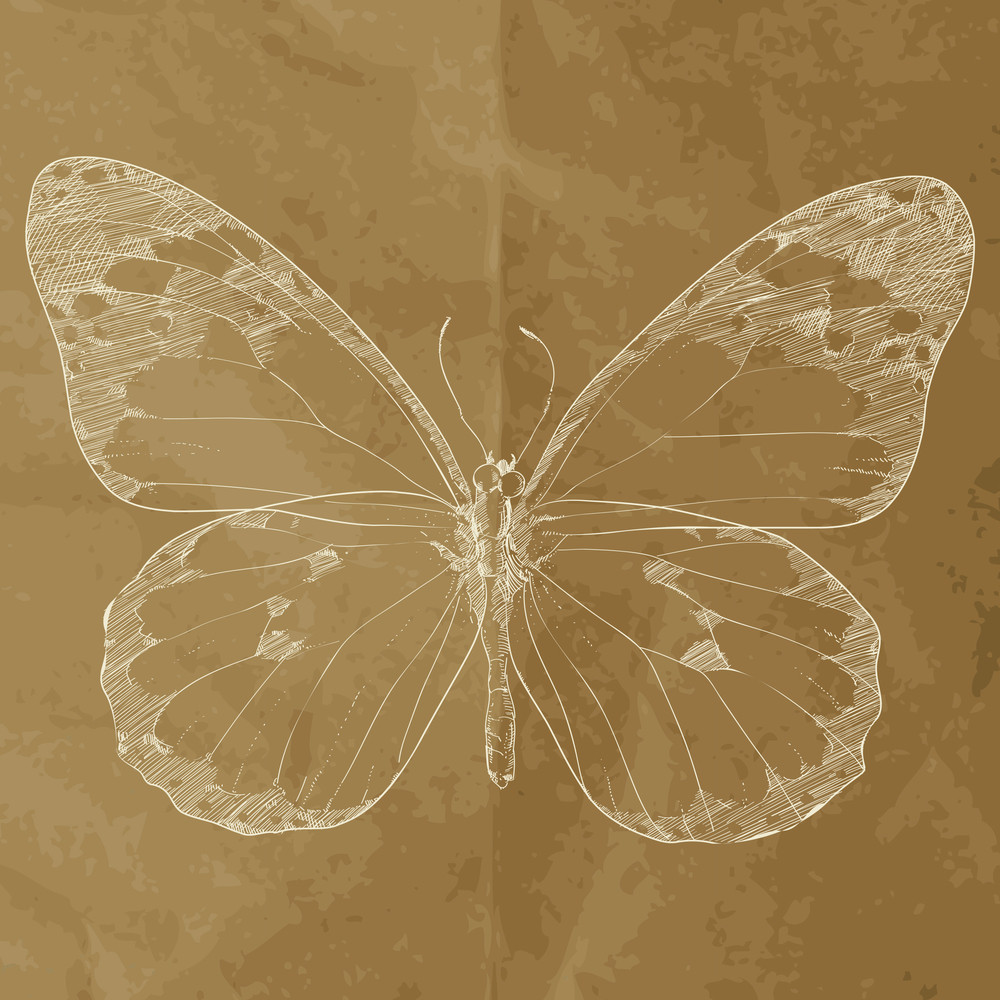 Vector Illustration Of A Monarch Butterfly. Hand-draw.