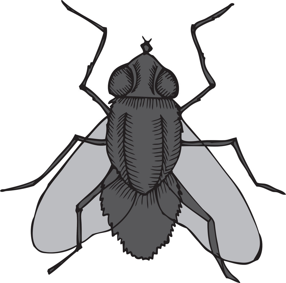 Vector Insect