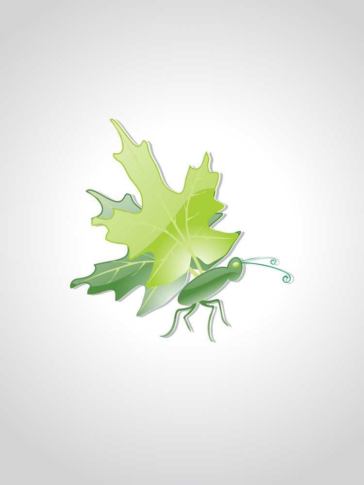 Vector Isolated Insect