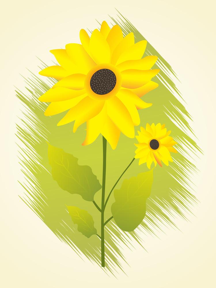 Vector Isolated Sunflower