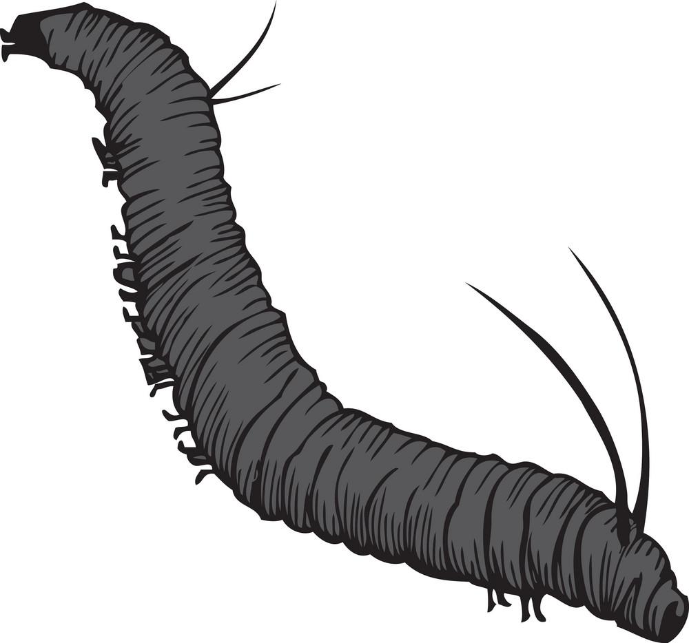 Vector Larva
