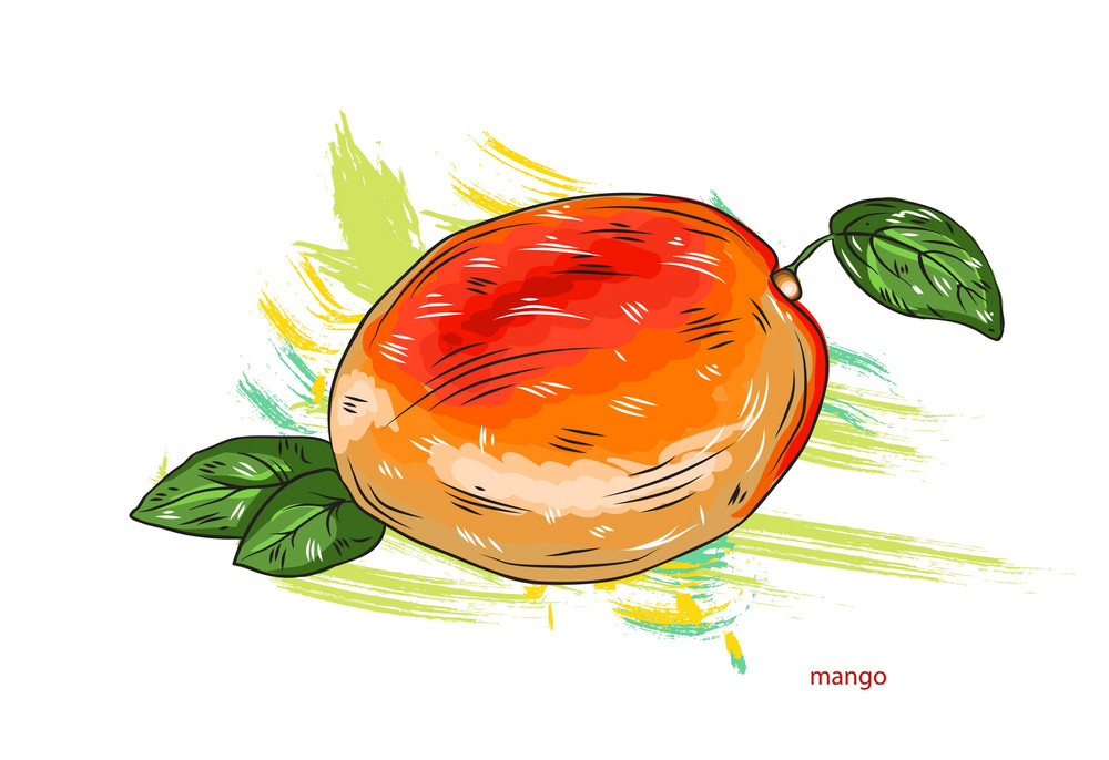Vector Mango With Colorful Splashes