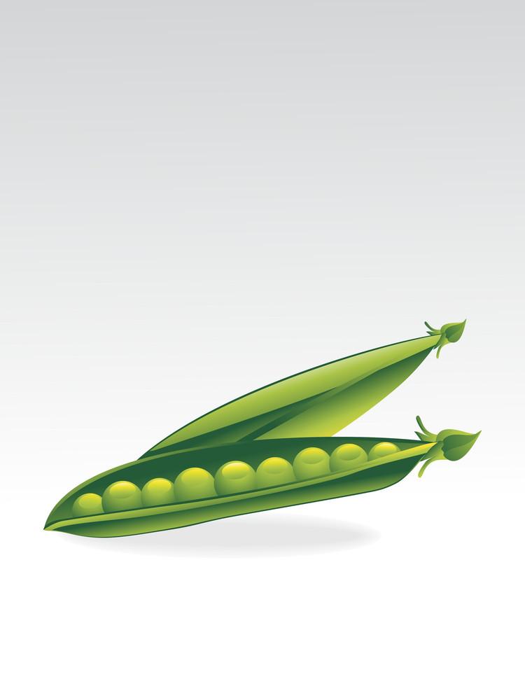 Vector Pair Of Glossy Peas