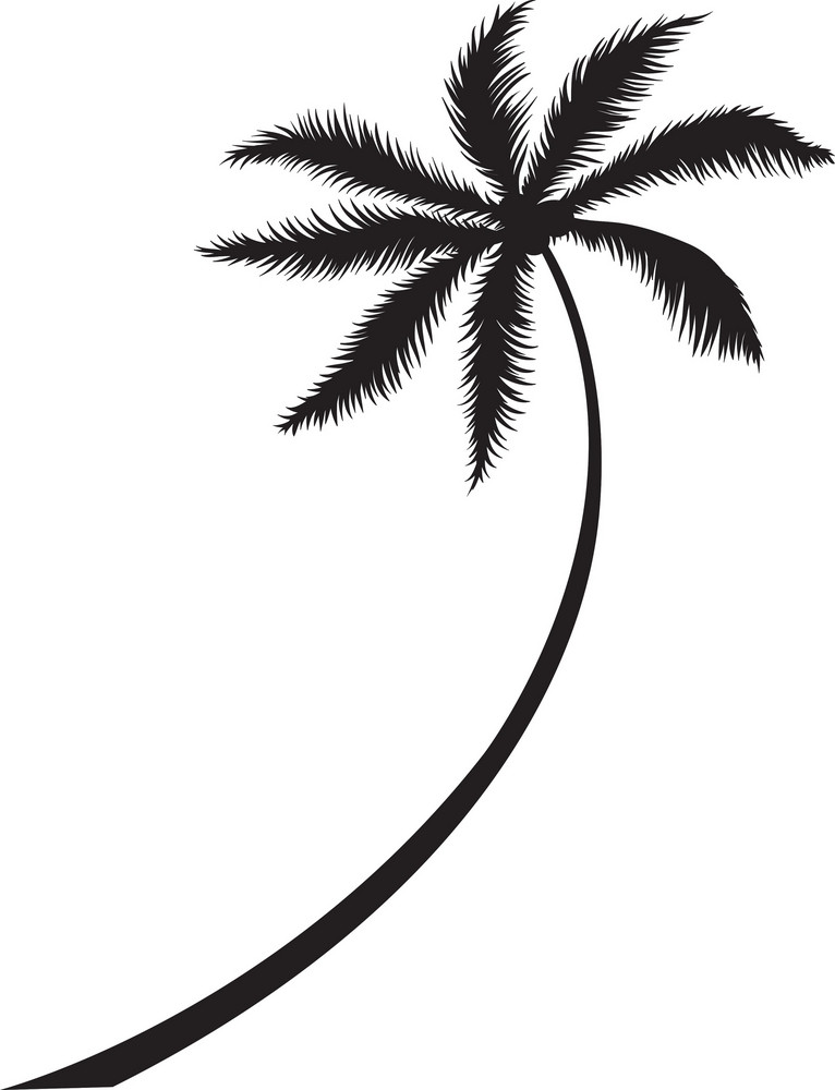 Vector Palm Tree