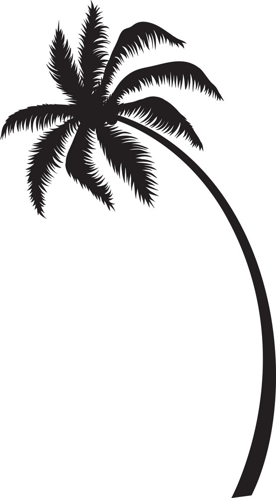 vector palm tree royalty free stock image storyblocks rh storyblocks com palm vector xp50 palm vector kayak