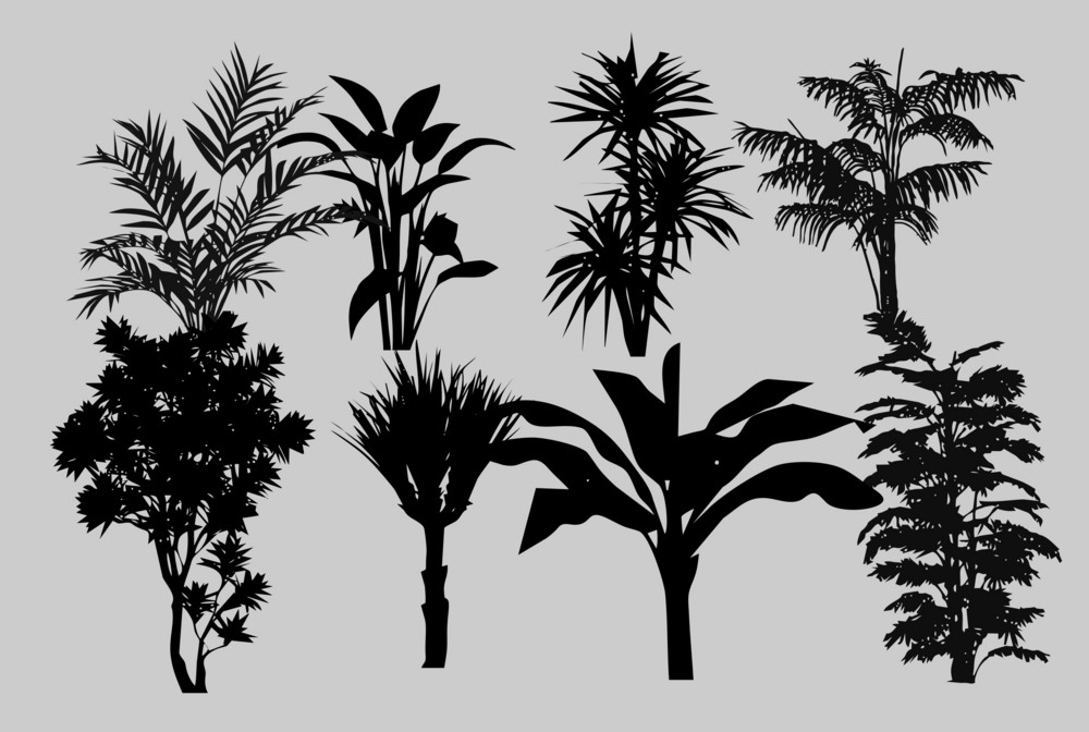 Vector Palms Silhouettes