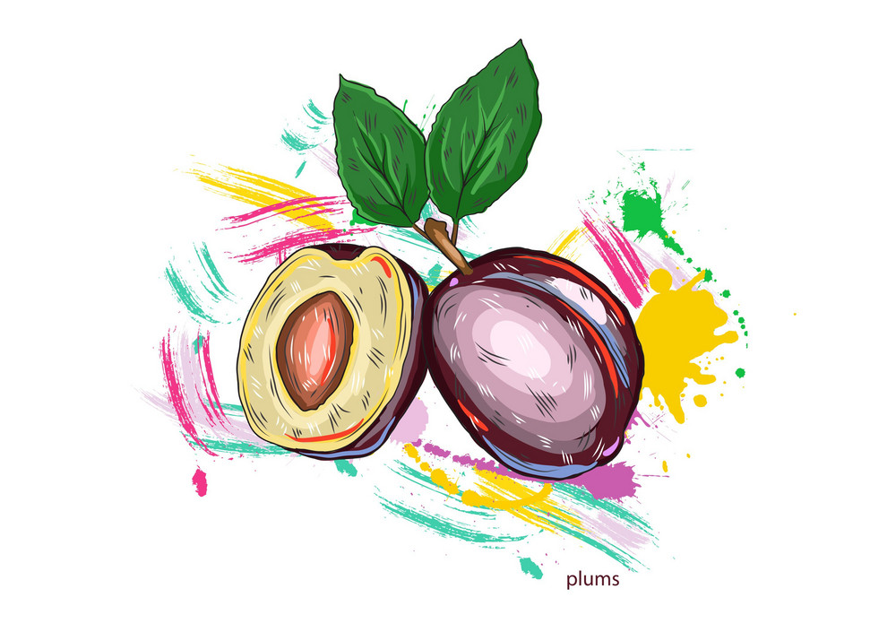 Vector Plums With Colorful Splashes