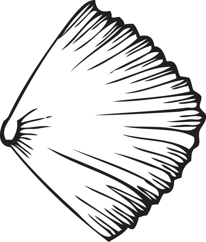 Vector Sea Shell