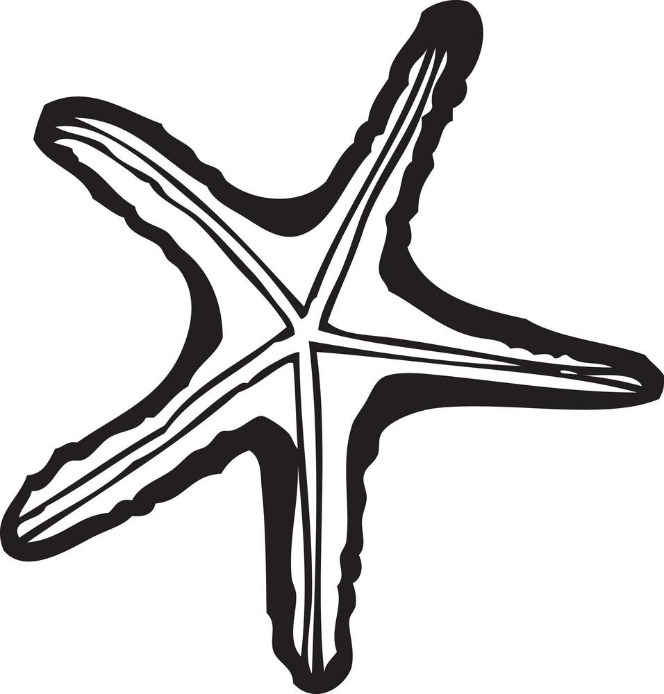 Vector Sea Star