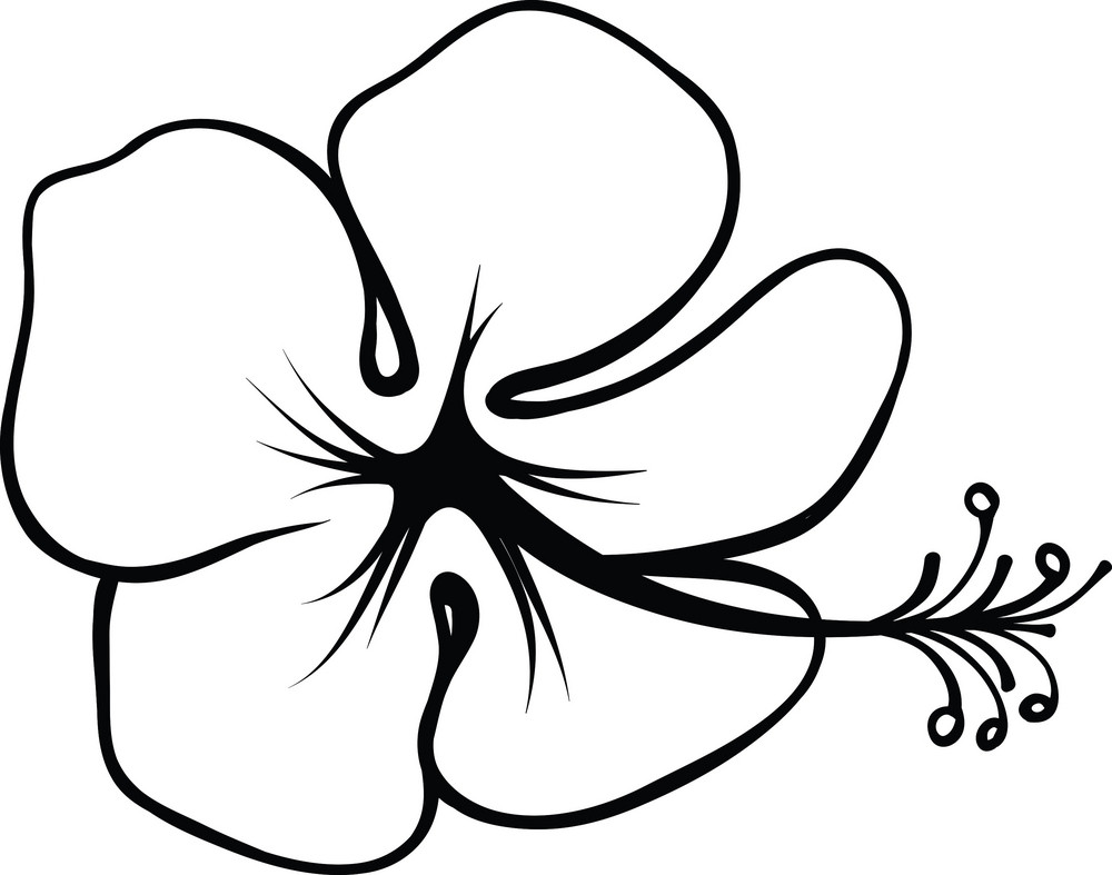 Tropical Flower Line Drawing : Vector tropical flower royalty free stock image storyblocks