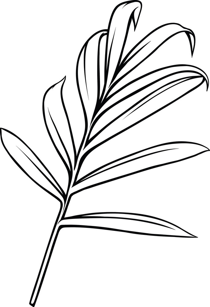 Vector Tropical Plant