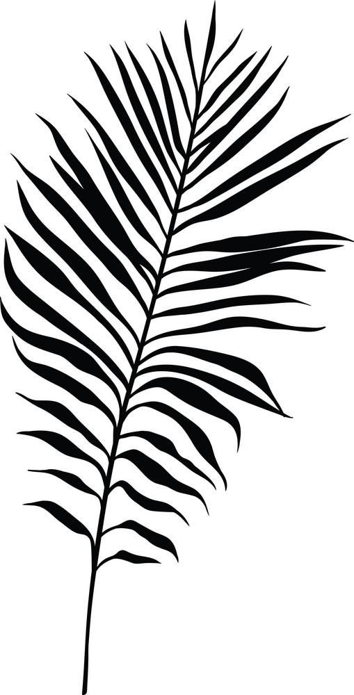 Vector Tropical Plant