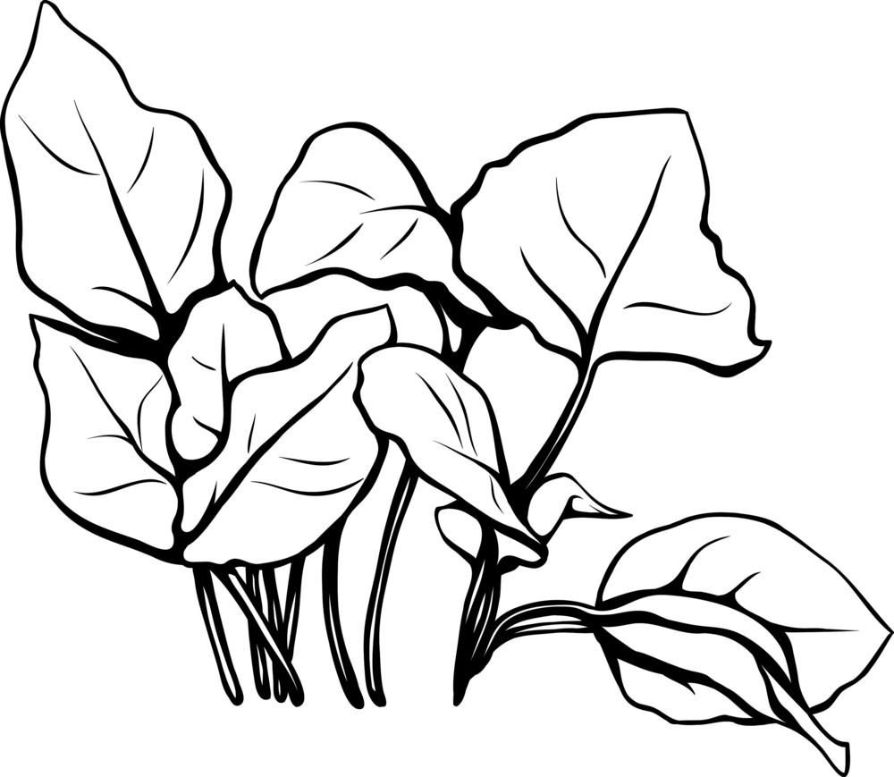 Vector Tropical Plants