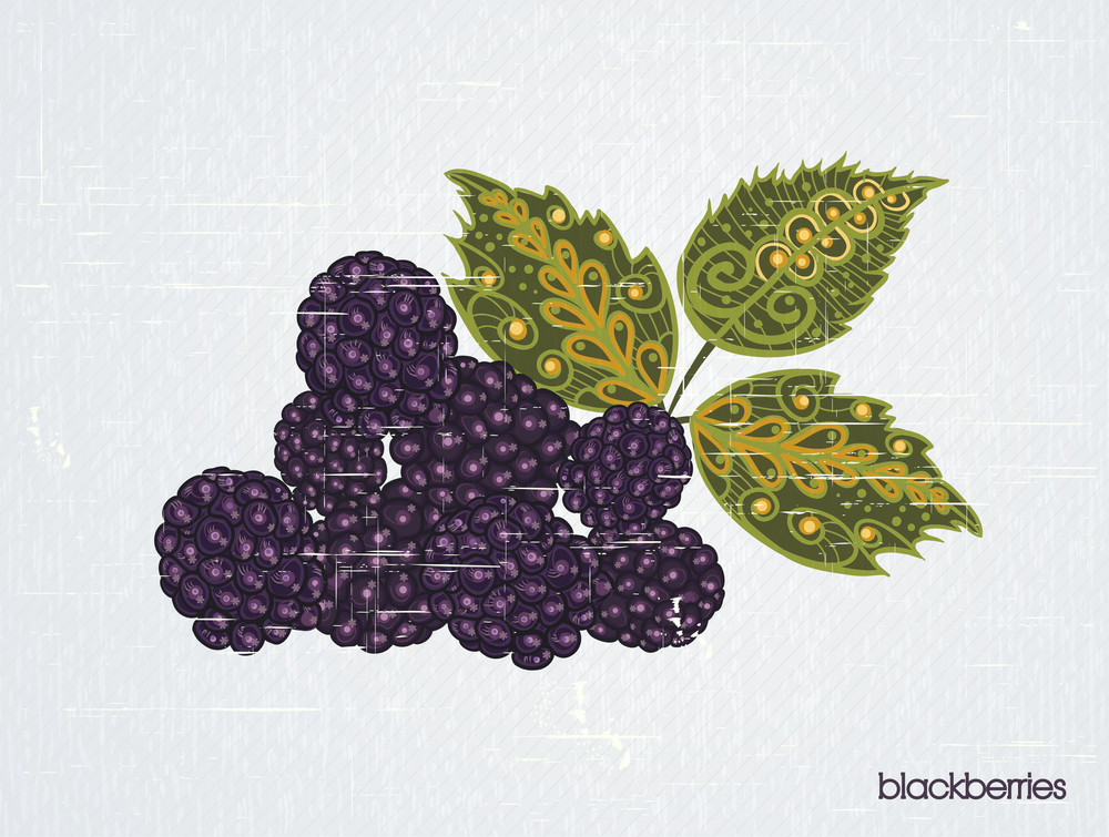 Vector Vintage Background With Blackberries