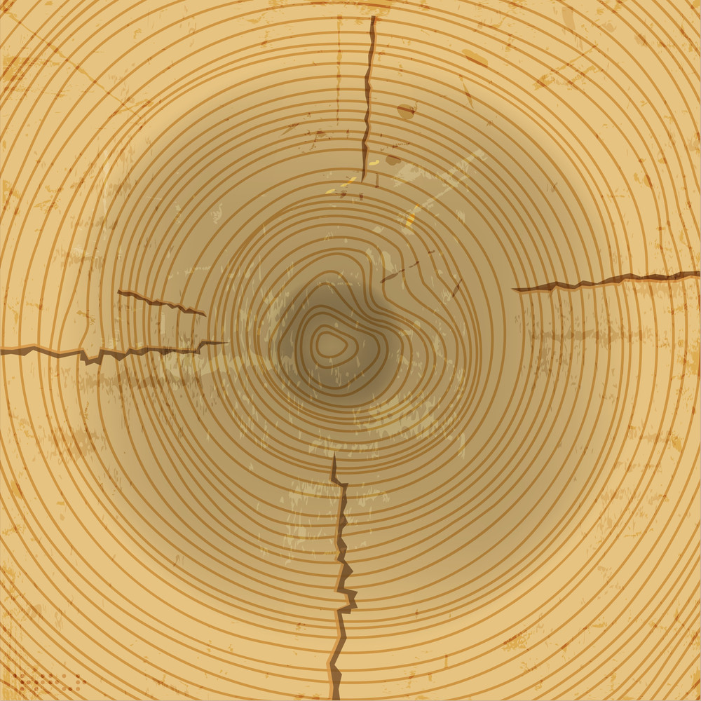 Vector Wood Cross Section Background