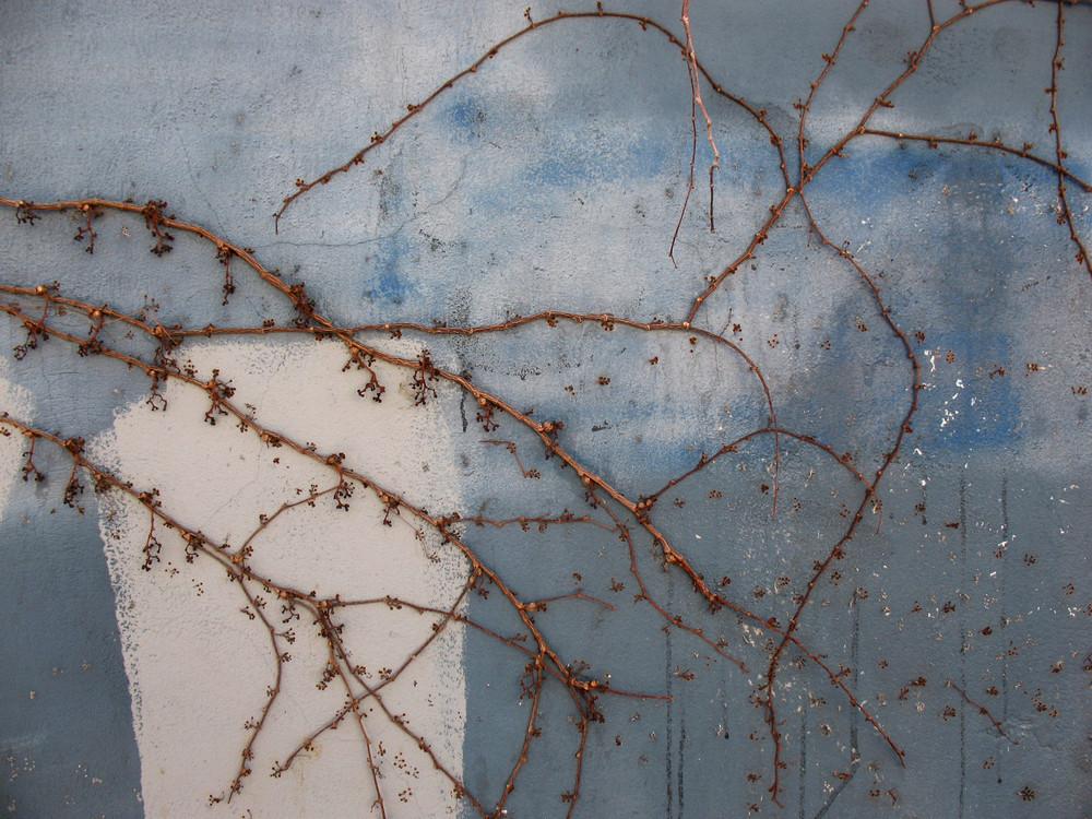 Vines 2 Texture