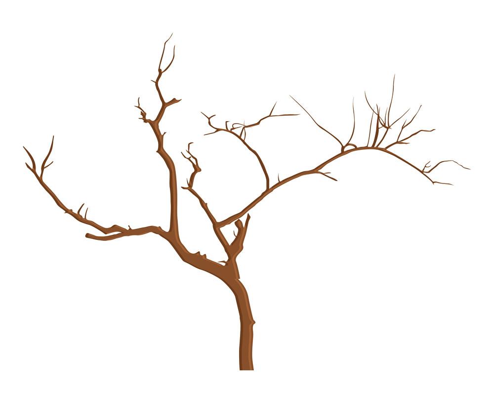 Vintage Dead Tree Branches