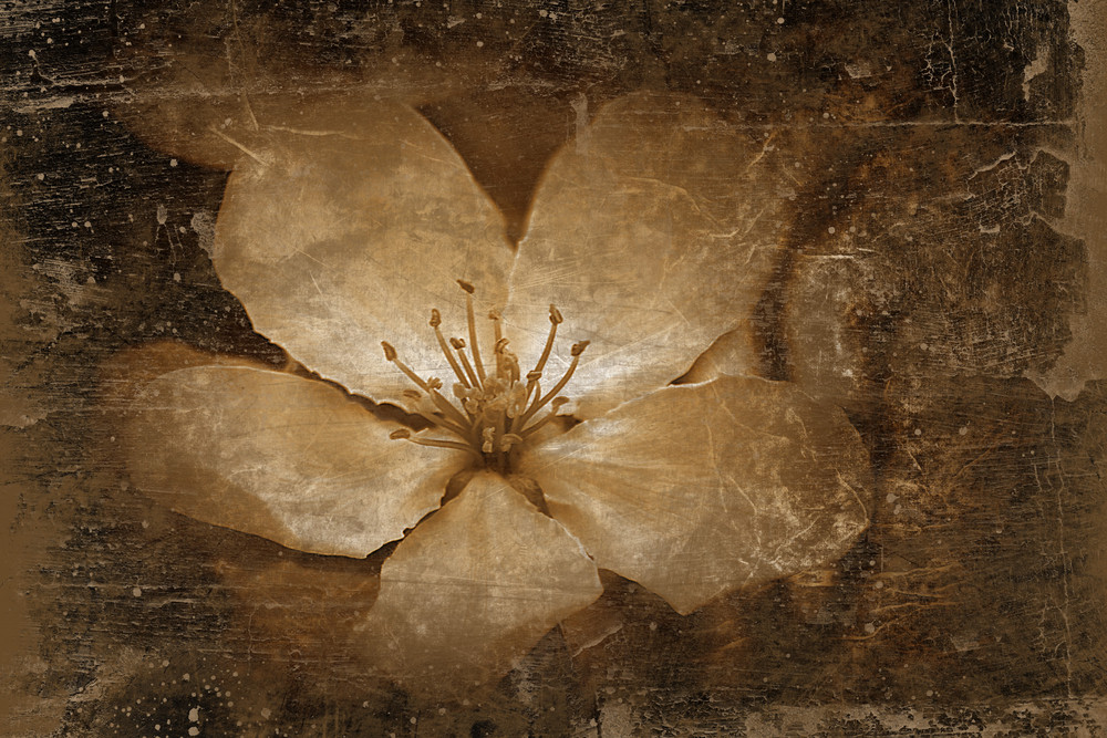 Vintage Floral And Grungy Background