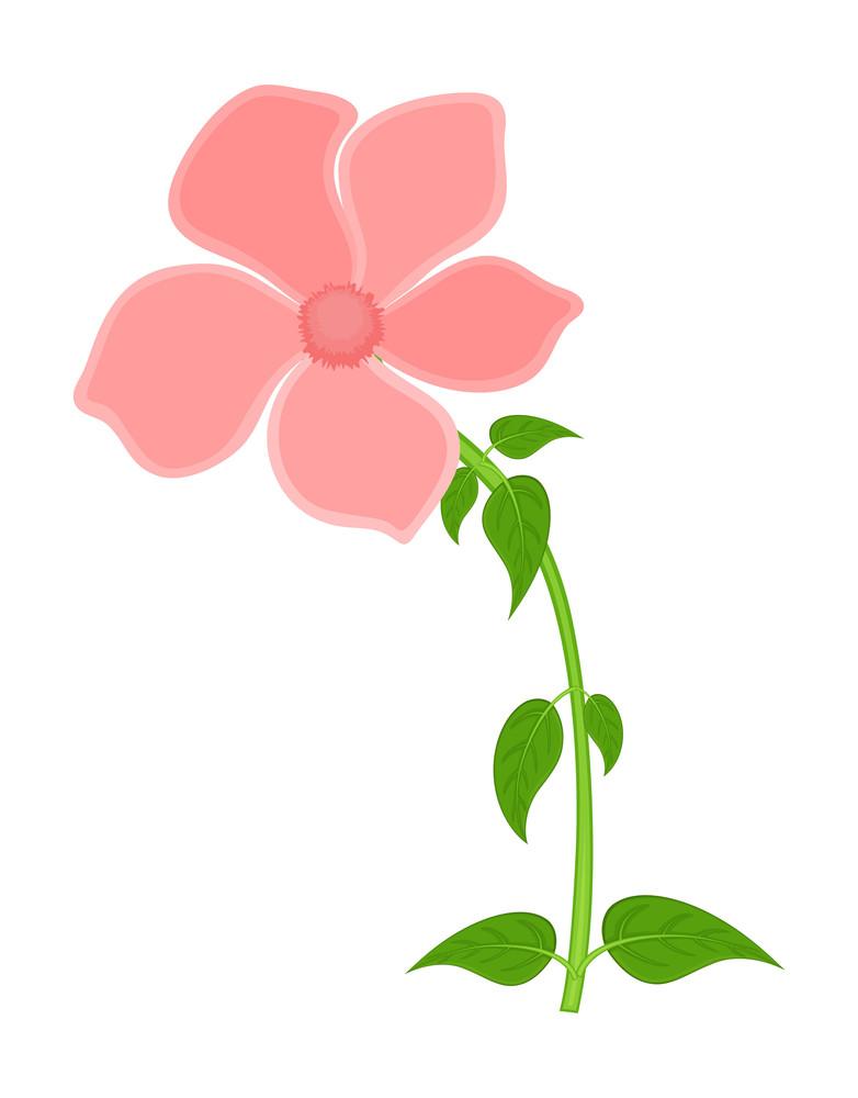 Vintage Flower Plant