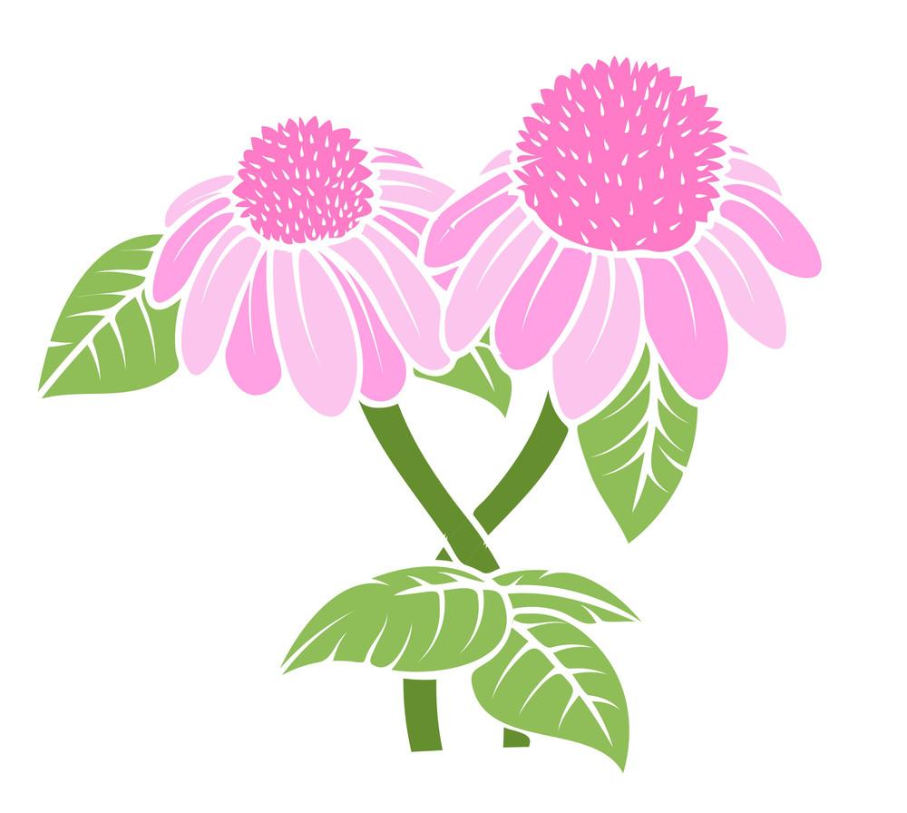 Vintage Pink Blossoms