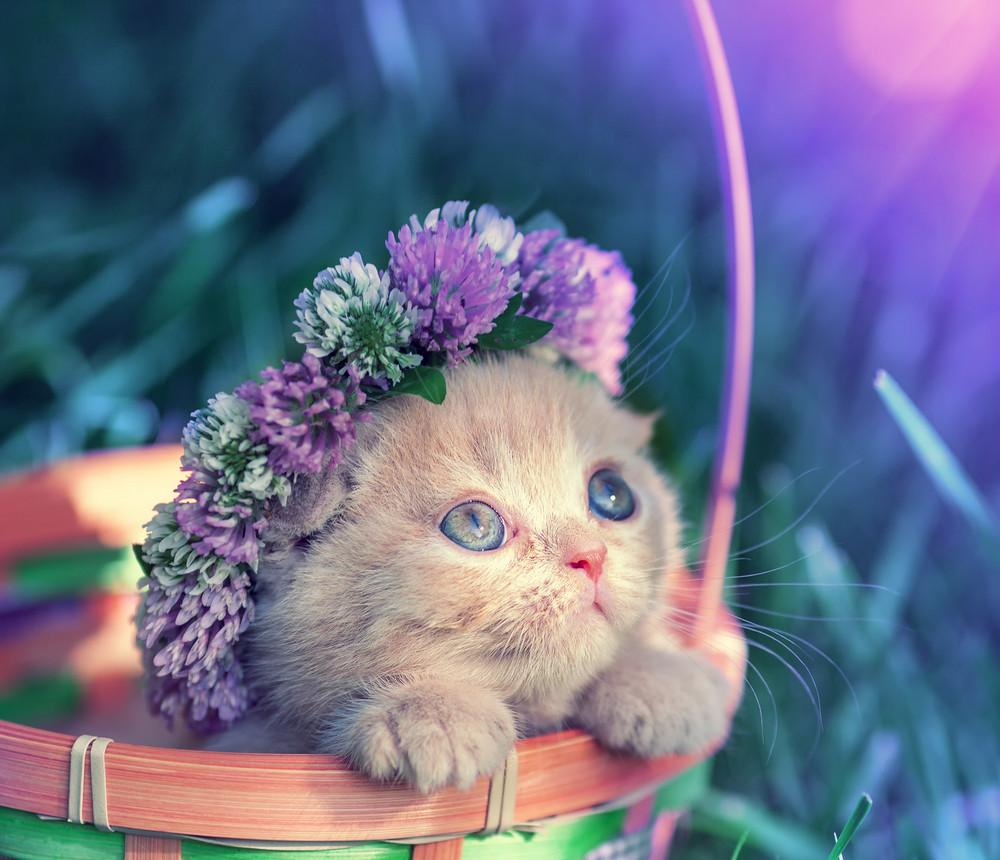 Vintage portrait of little kitten crowned clover chaplet