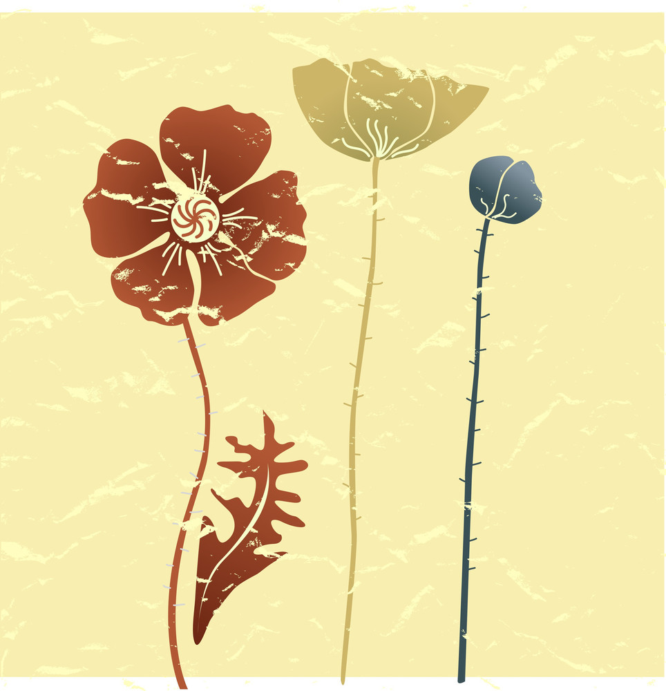 Vintage Summer Background With Poppies