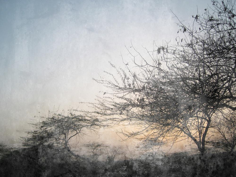 Vintage Tree Landscape Background