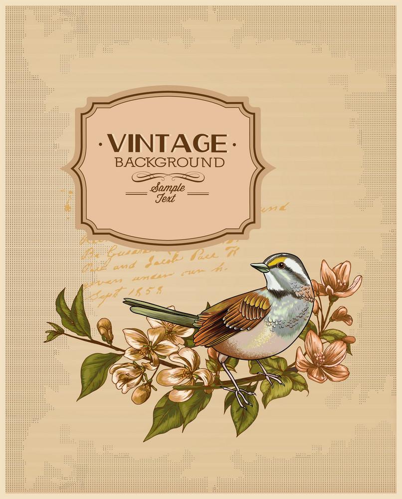 Vintage Vector Illustration With Spring Flower, Frame , Bird