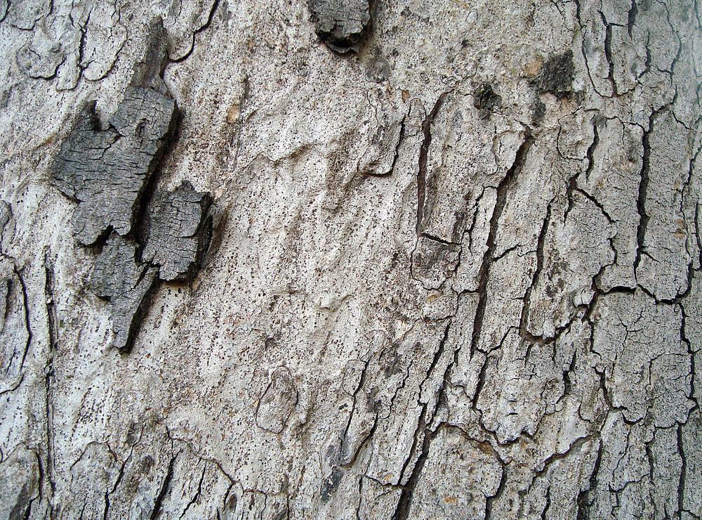 Vintage_tree_bark