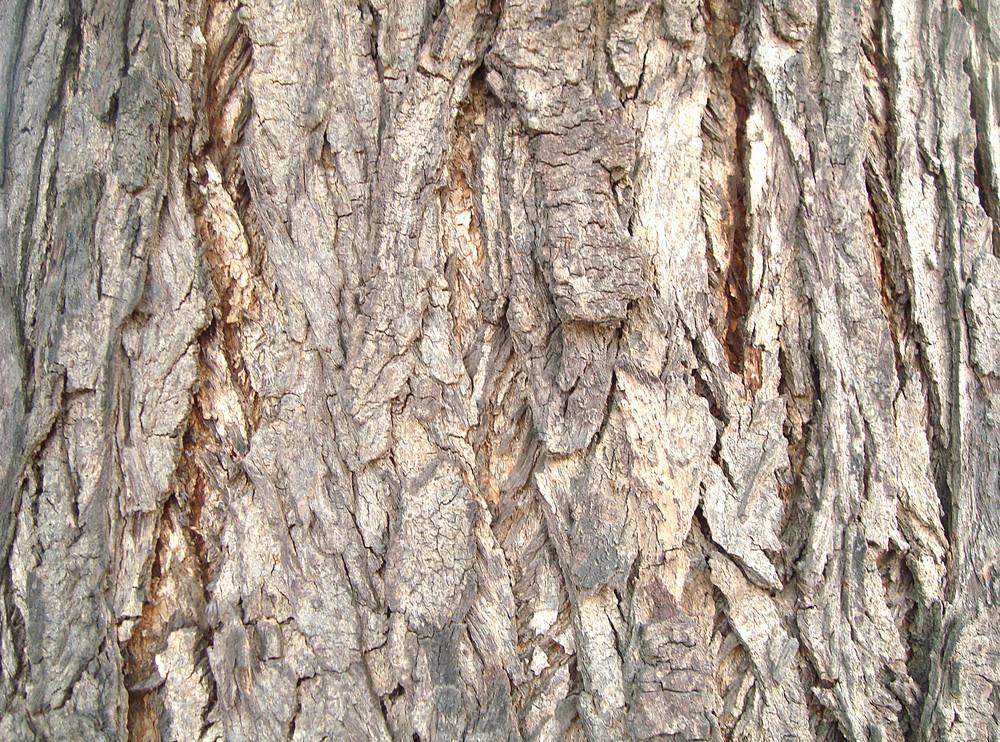 Vintage_tree_bark_texture