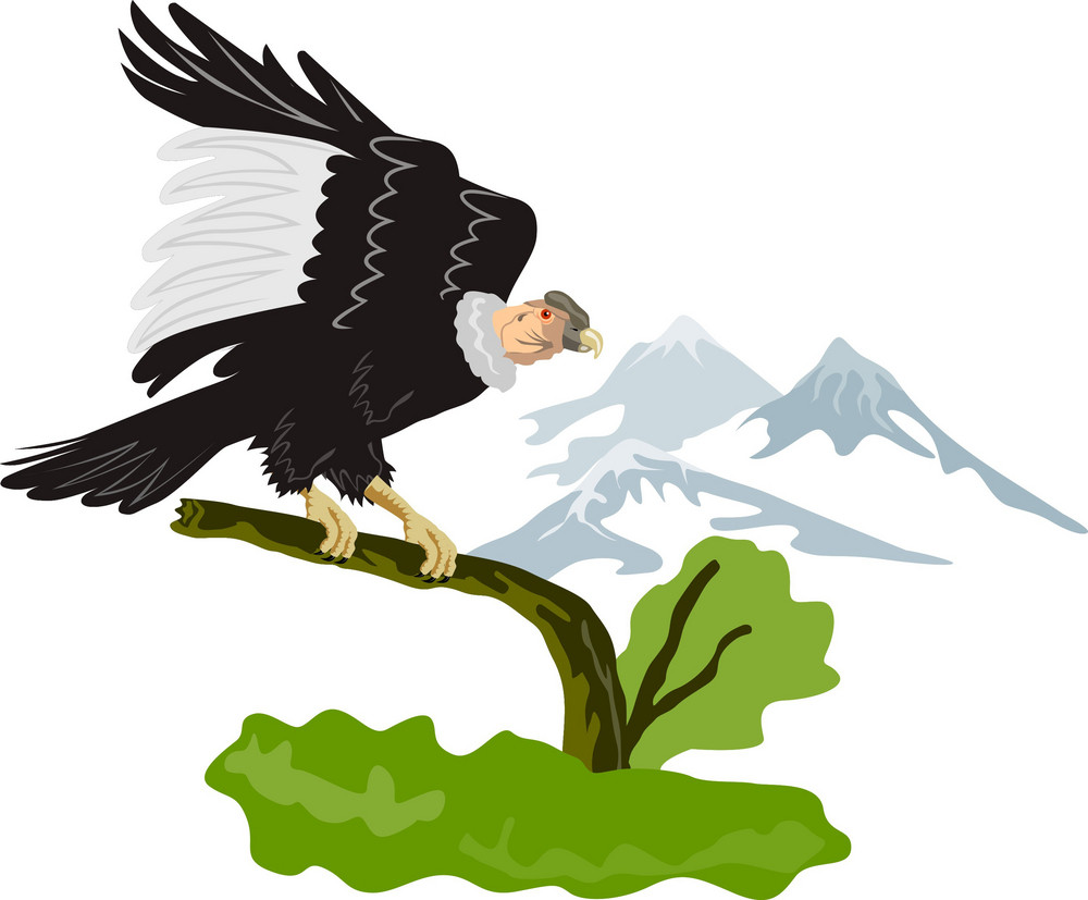 Vulture Buzzard Bird