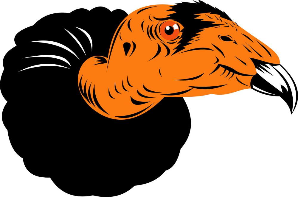 Vulture Buzzard Head