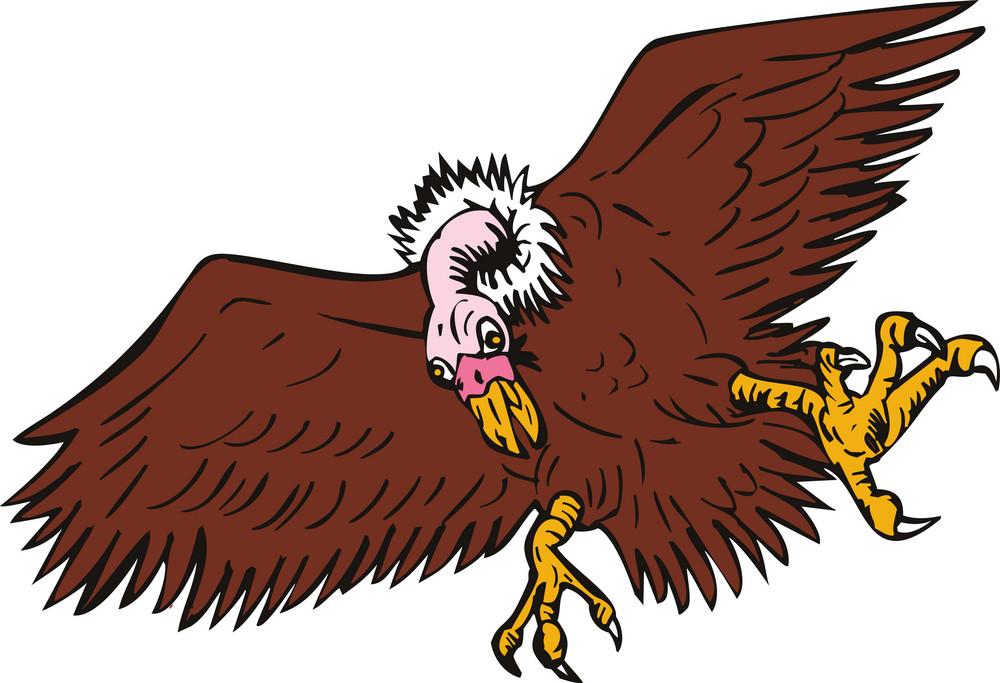 Vulture Buzzard