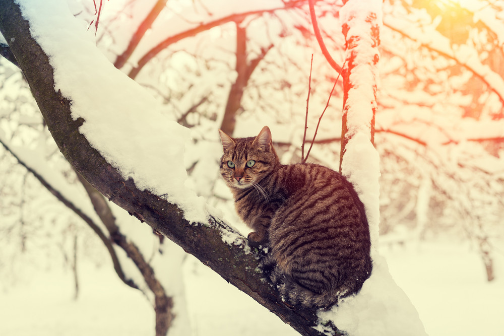 Cat on the tree covered with snow