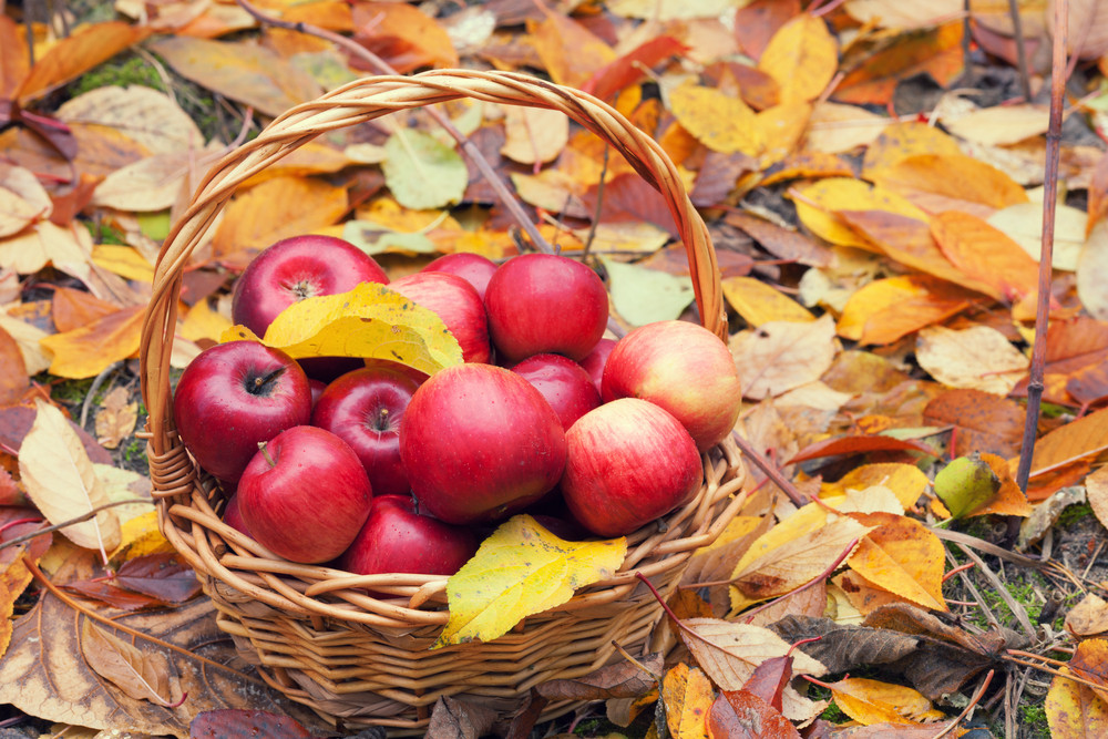 Basket with apples on the fallen leaves