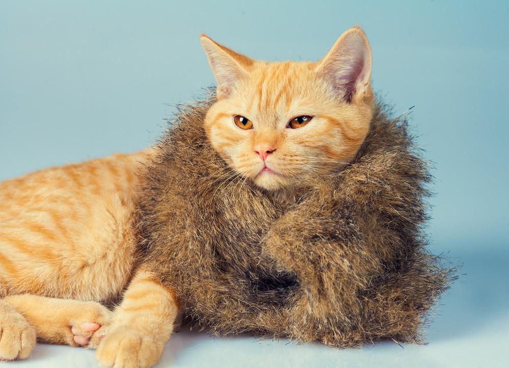 Portrait of cute cat wearing fur coat