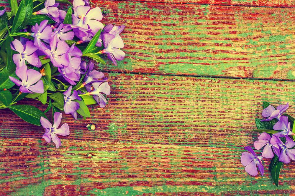 Fundo de madeira do grunge com flores da pervinca
