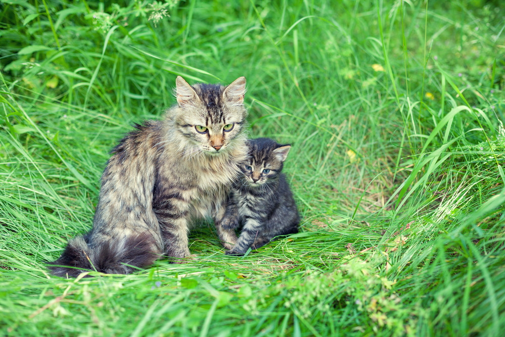 Mom cat with little kitten on the grass