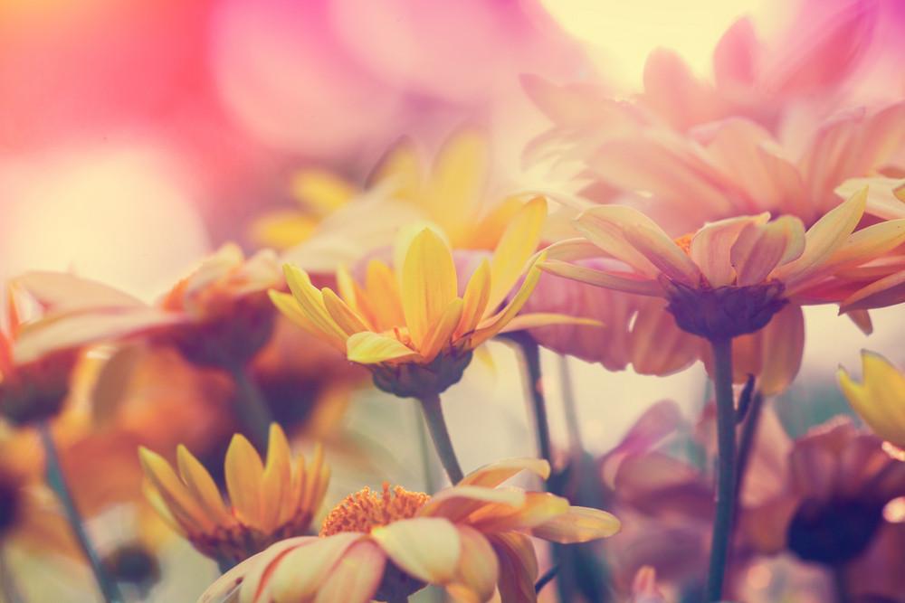 Vintage flores para o fundo