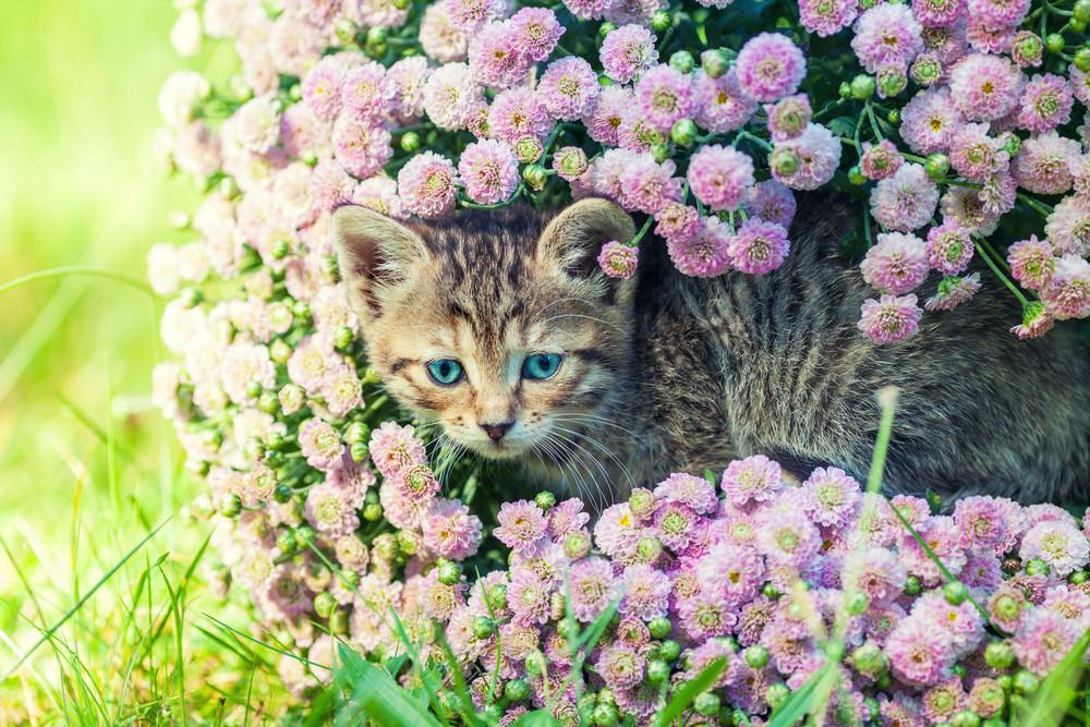 Cute kitten relaxing in flowers