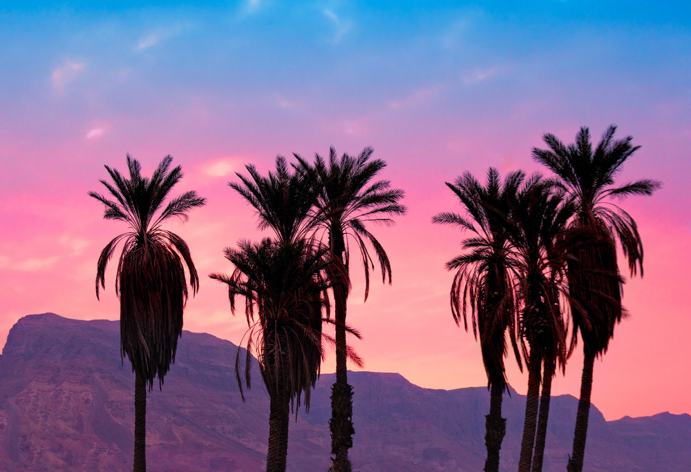 Palm trees at sunset in desert against mountain