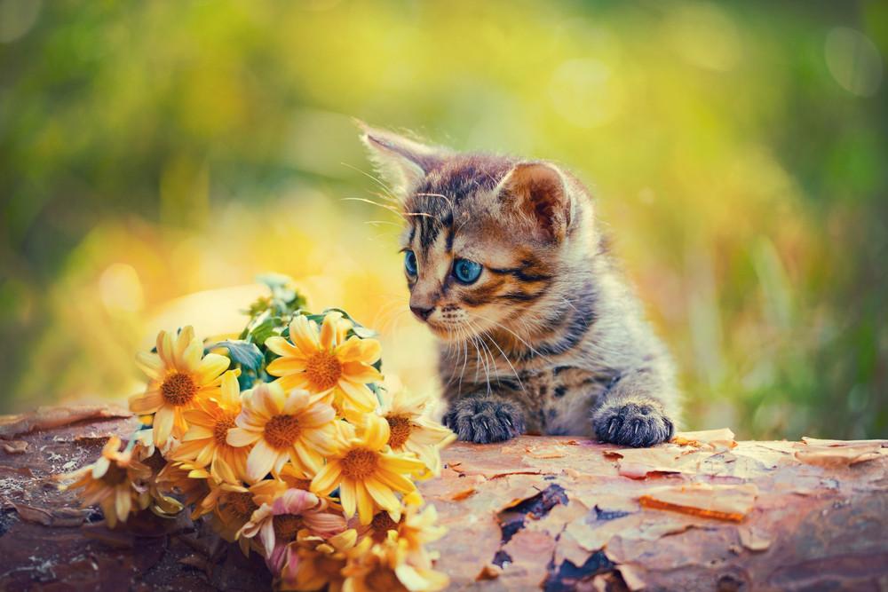 Cute little kitten outdoor looking at flowers on wooden snag
