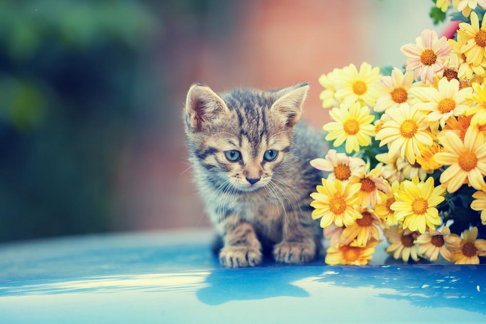 O gato pequeno bonito senta-se perto das flores amarelas