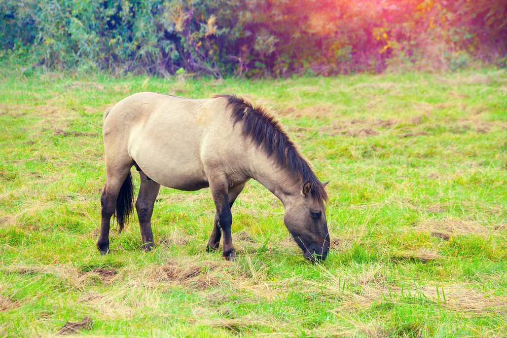 Wild horse on the meadow