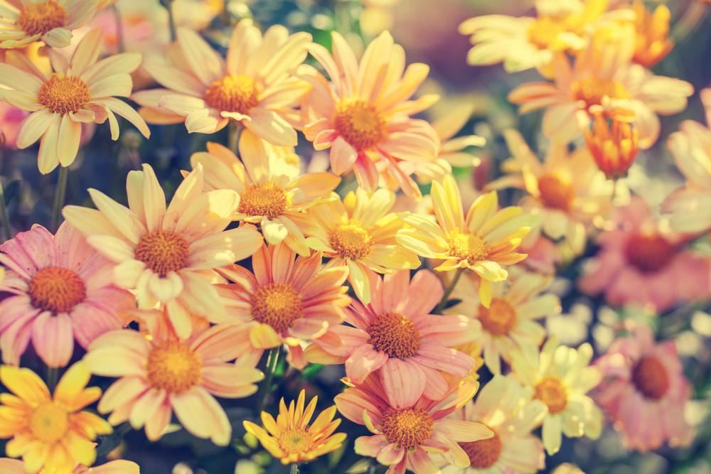 Flowers at sunrise light
