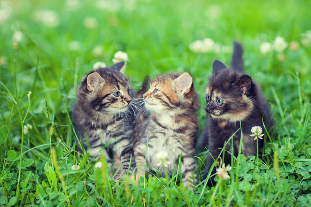 Three little kittens sitting on the grass