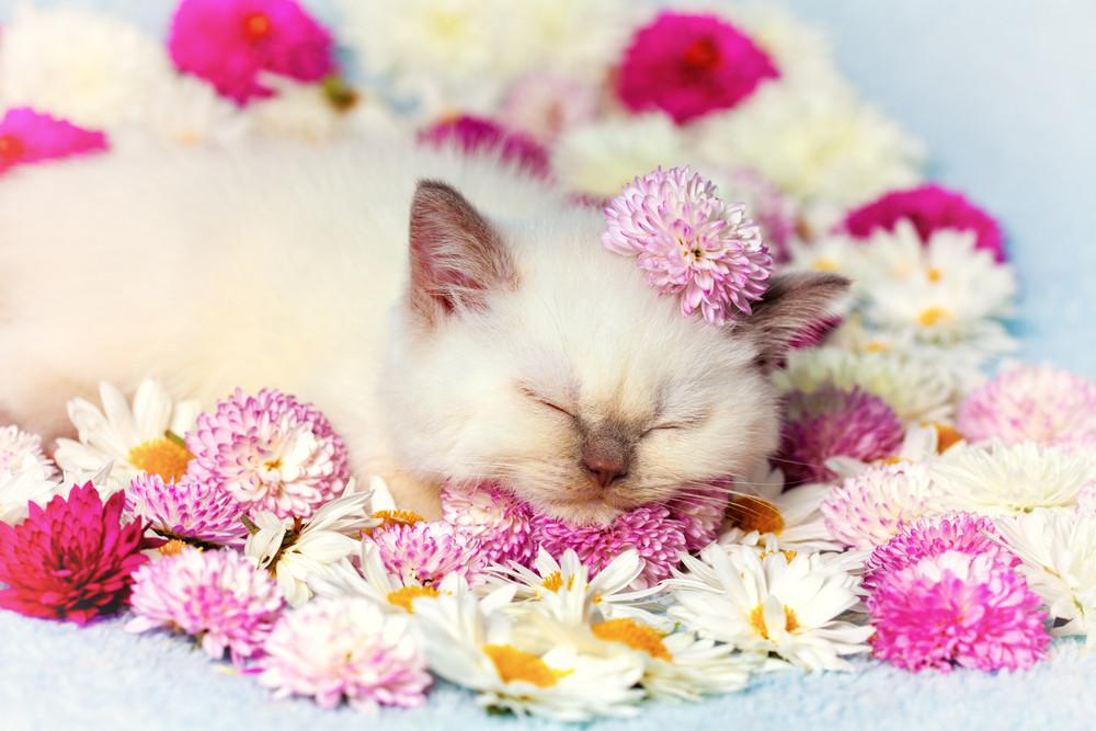 Little kitten lying among the flowers